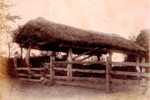 Picture of a thatched open barn, near Uffculme, Devon.  Undated.