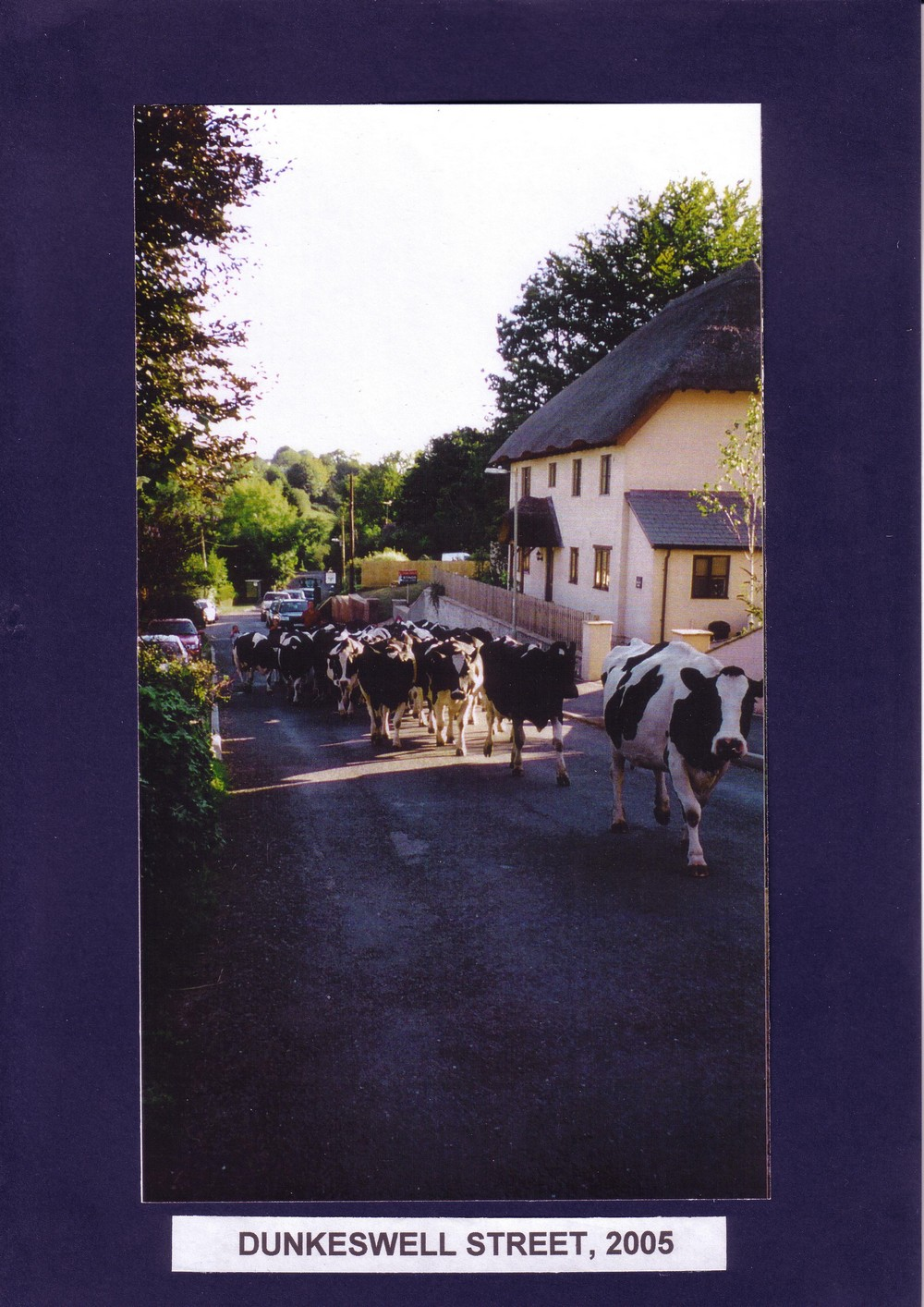 018 Dunkeswell Street with cows  2005